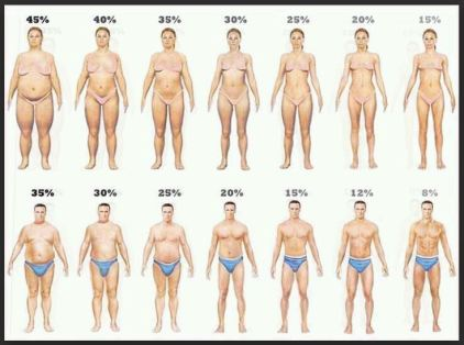 body fat images